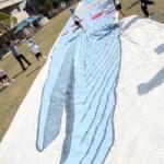 シロナガスクジラが現れました!